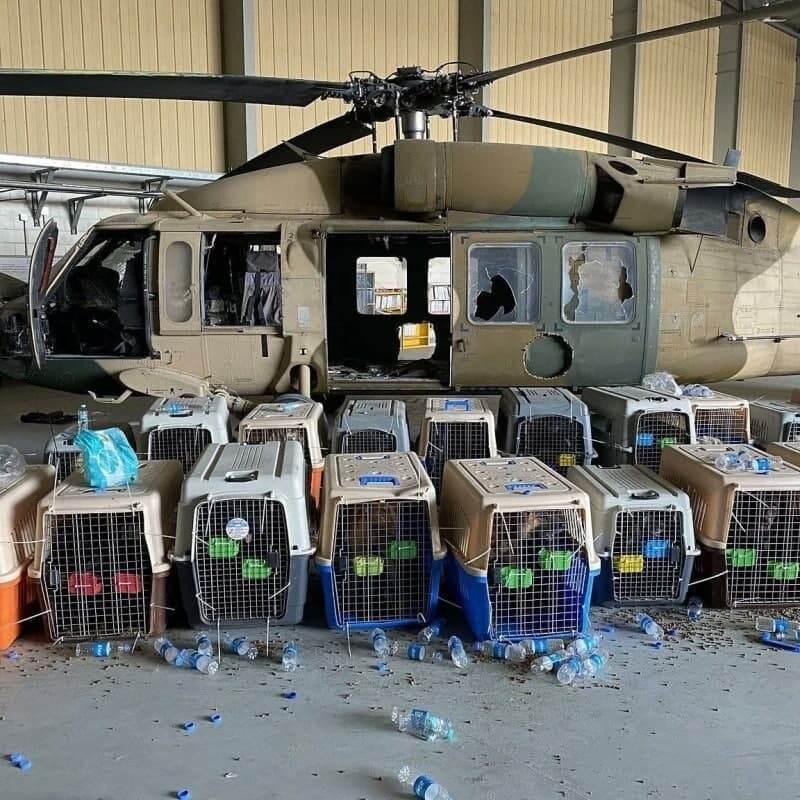 Службових собак армії США залишили в Кабулі