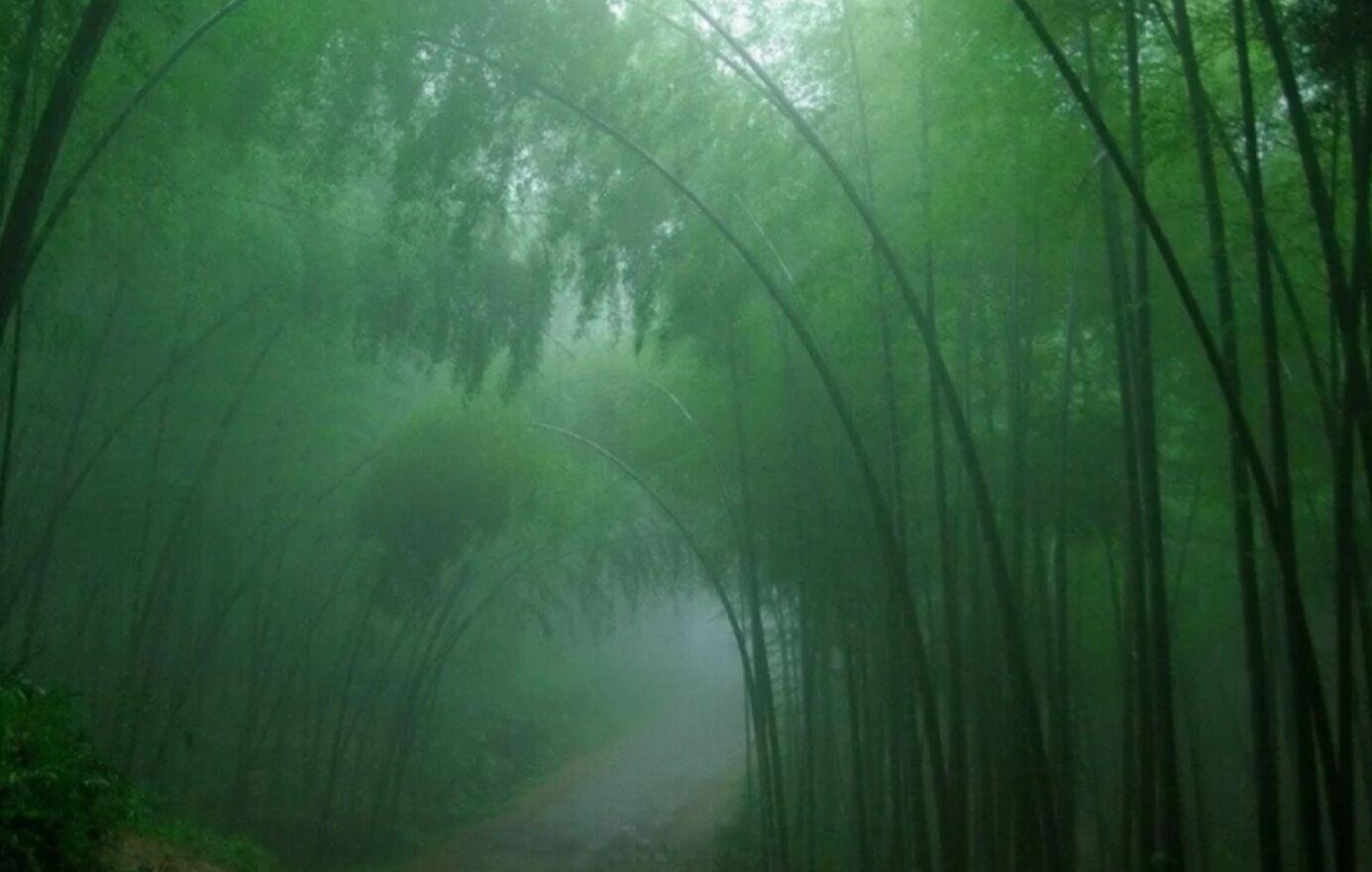 Лощина черного бамбука в Китае