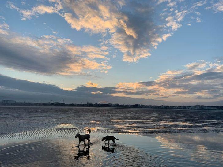 Собачки гуляют на пляже в Ирландии.