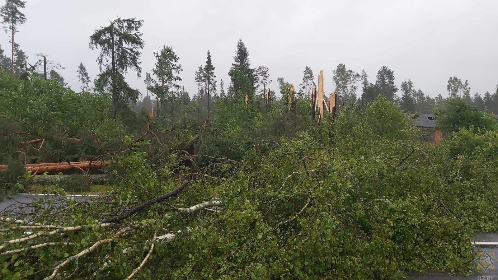 Ветер повалил деревья.