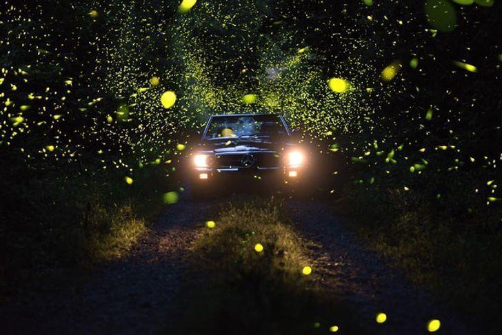 Мужчина сфотографировал светлячков в лесу.