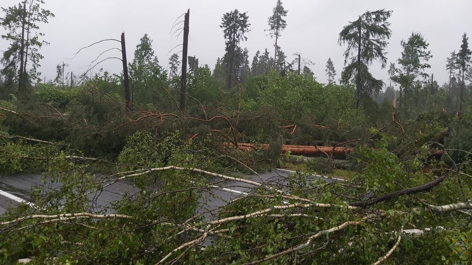 Во время урагана пострадала женщина.