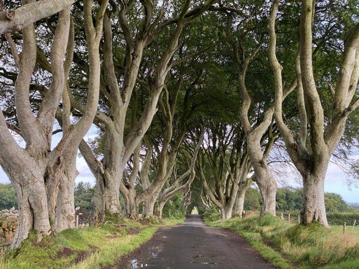 Королевский тракт в Северной Ирландии.