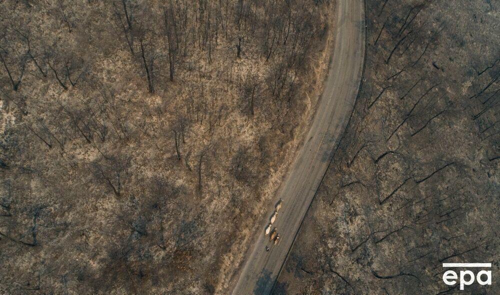 Пожежі випалили землю.