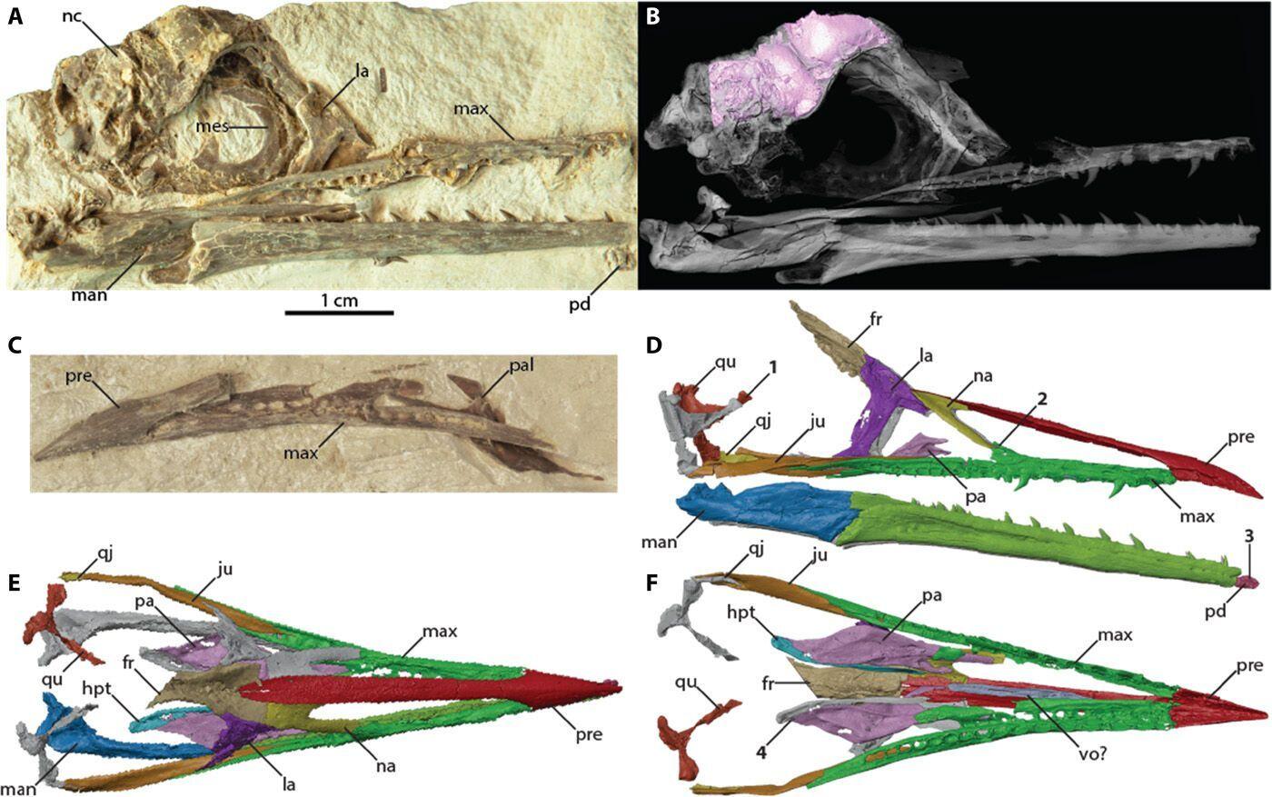 Обнаруженной окаменелости птицы около 70 миллионов лет