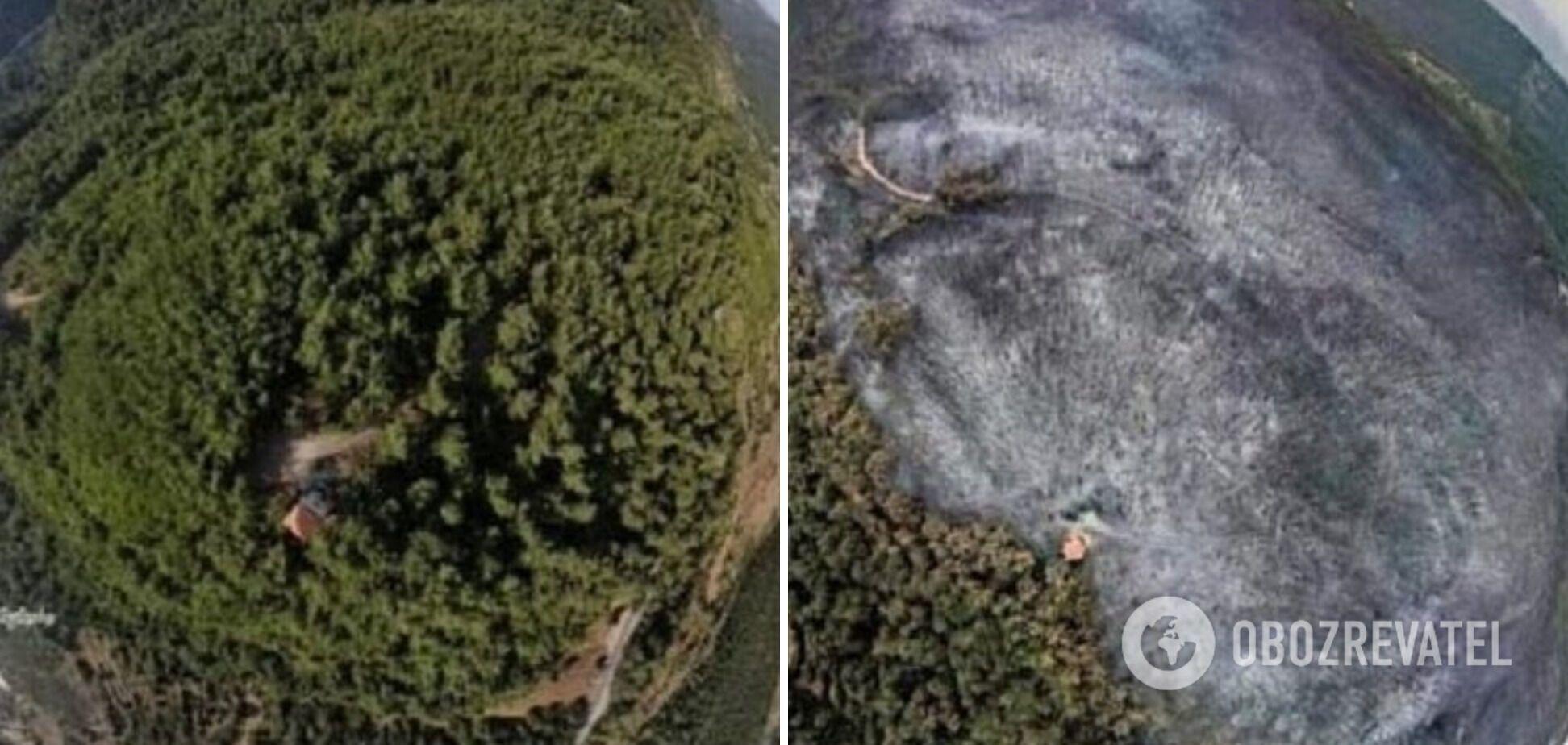 Ліс до і після пожежі.