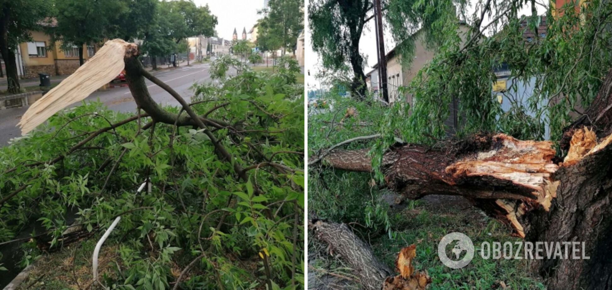Шквальний вітер повалив десятки дерев