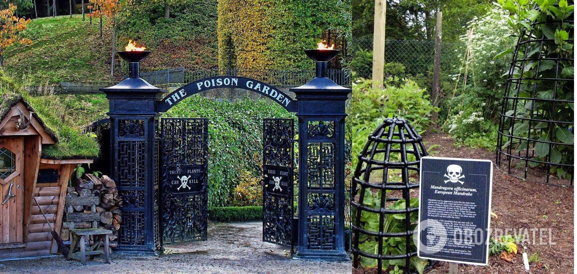 Ядовитый сад закрыт для вольного посещения