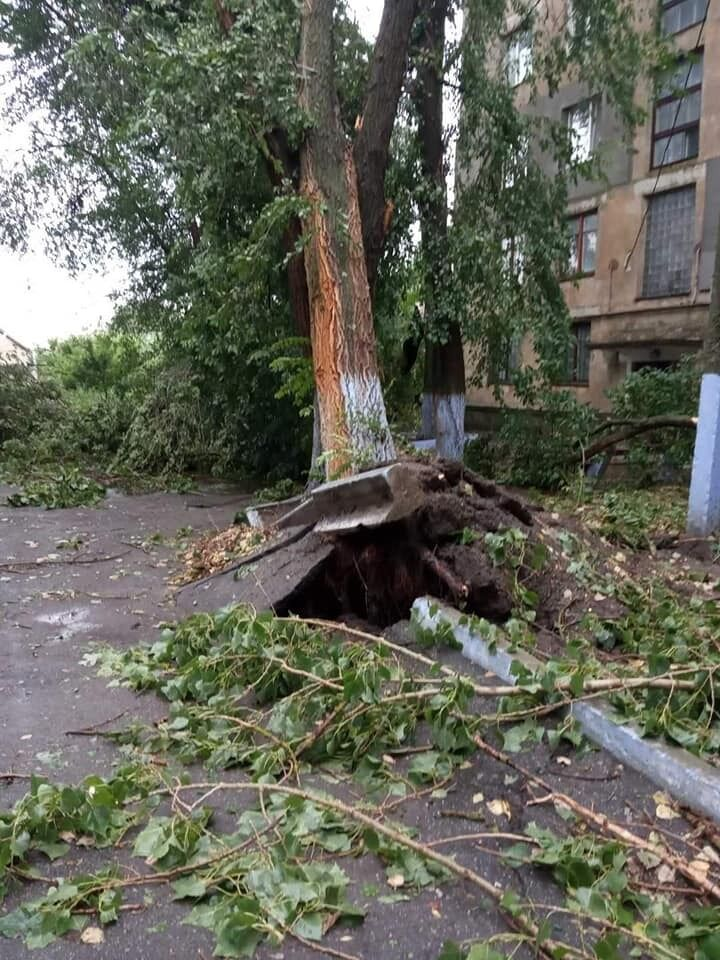 Дерево вырвало с корнем.