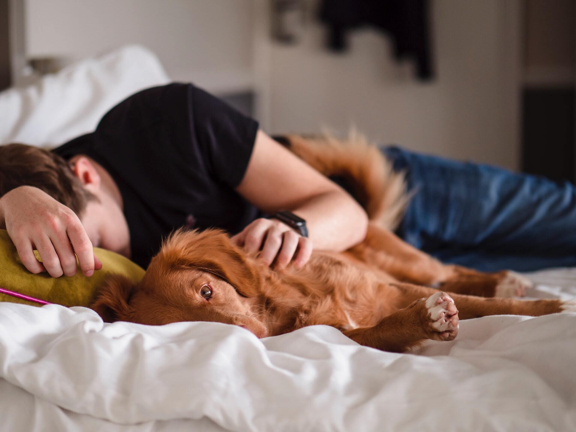 Найбільш корисним є глибокий сон і перехід у фазу REM
