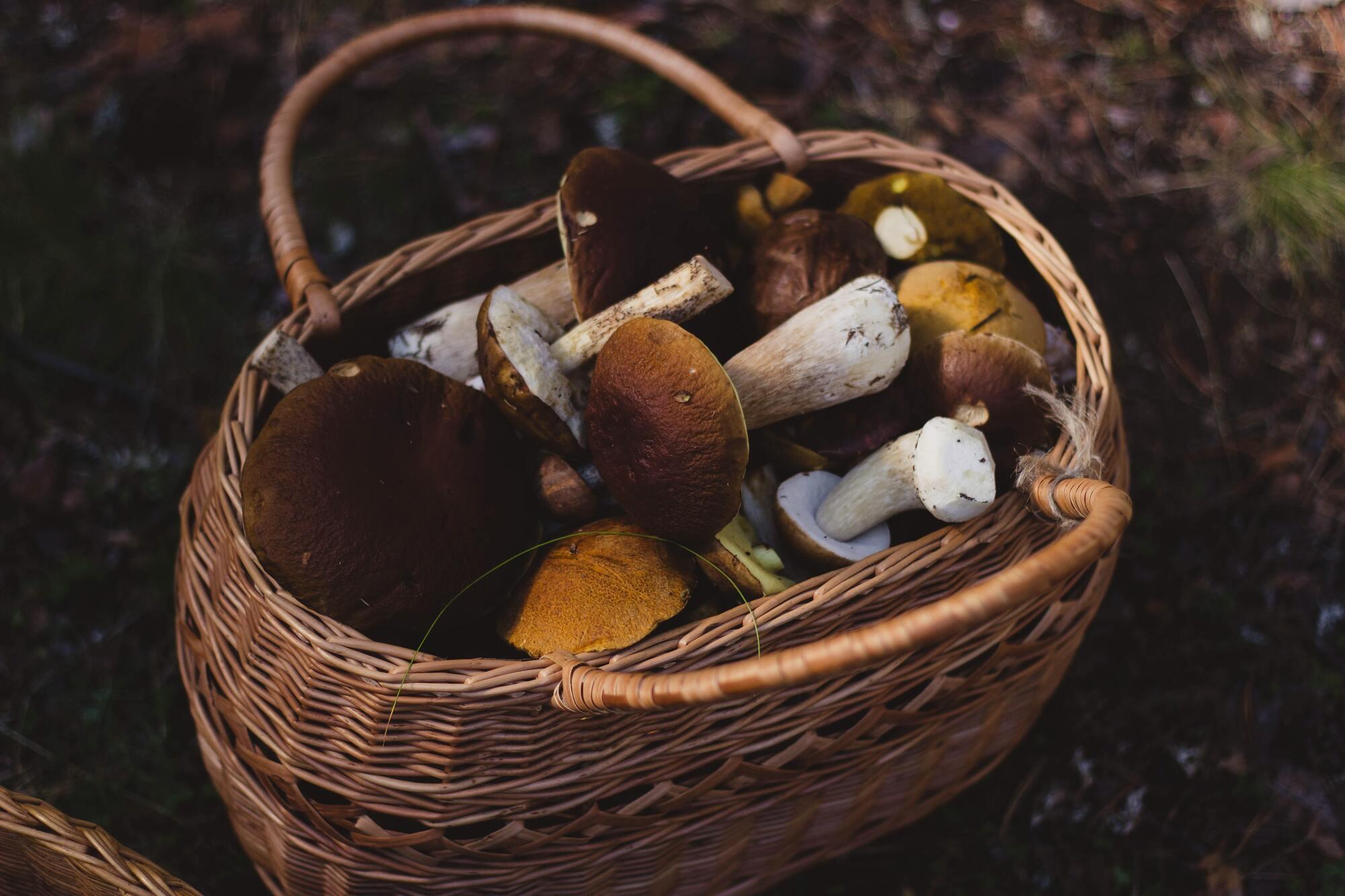 7 серпня здавна ходили в ліс за грибами