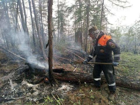 Пожежа охопила ліс.