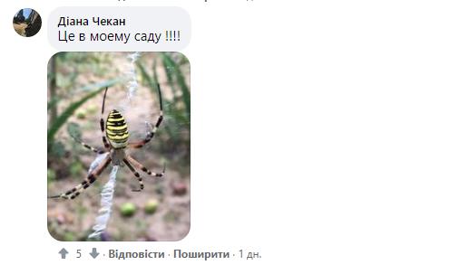 В Мукачево водятся Аргиопы