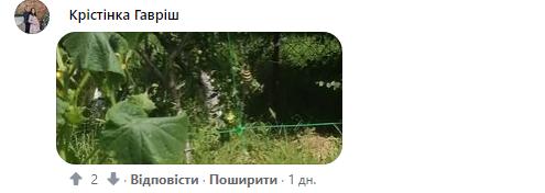 На Закарпатье заметили ядовитый вид пауков