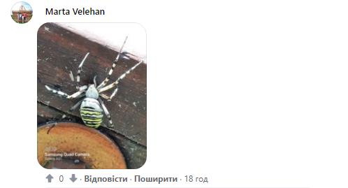 Пользователи показали пауков, найденных дома