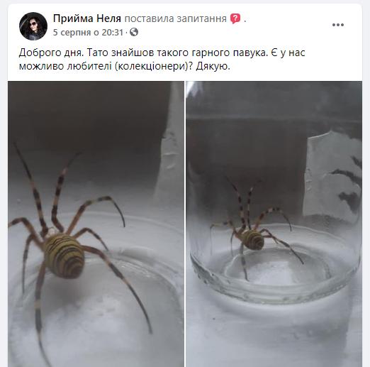 В Мукачево поймали Аргиопу