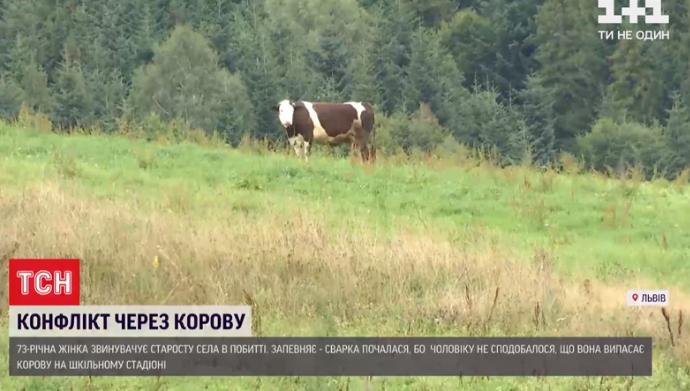 Корова Малина.