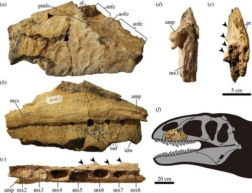 Останки динозавра