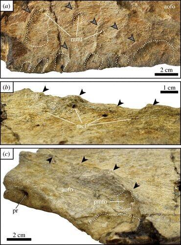 Найденные окаменелости