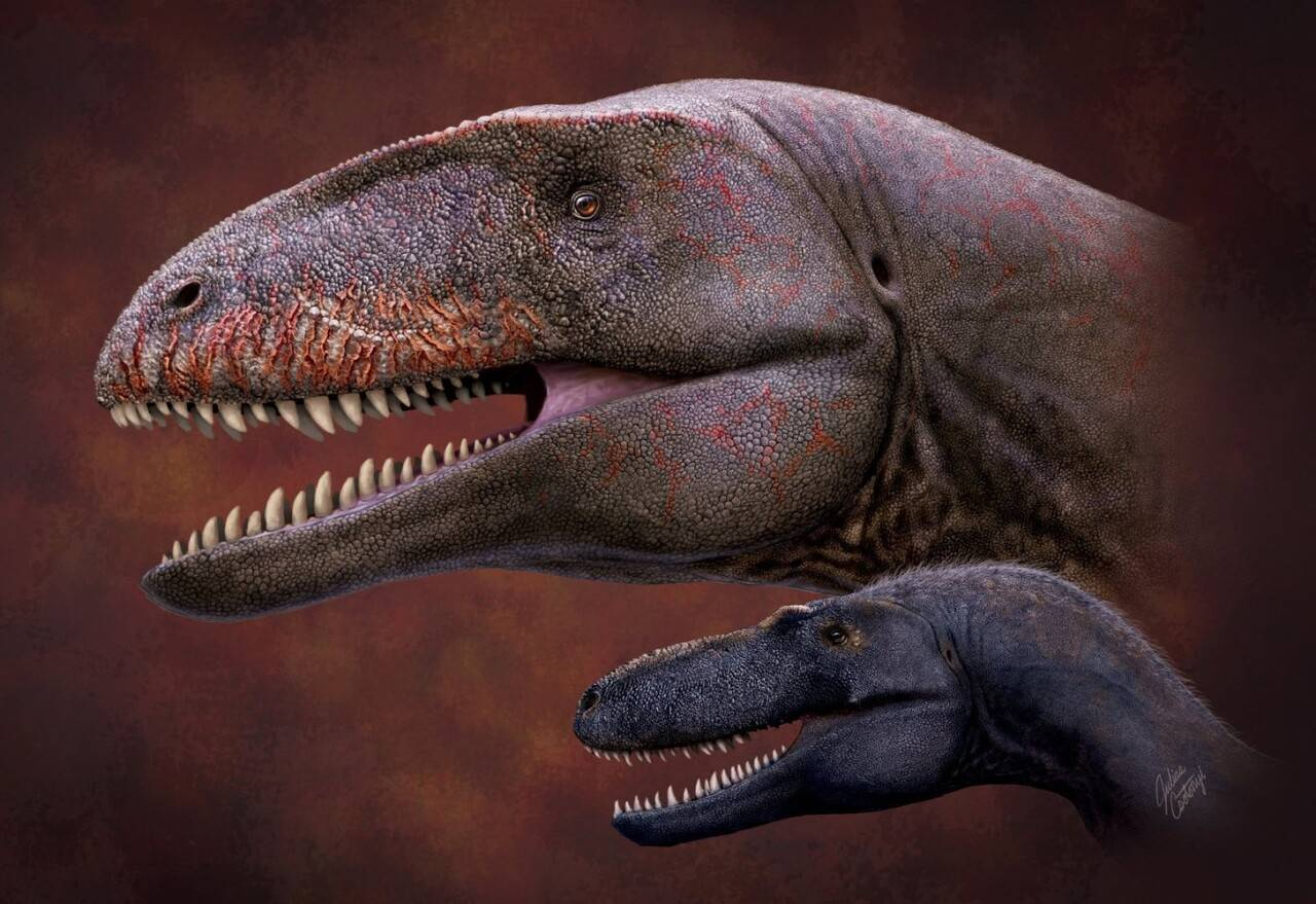 Возможный вид динозавра Ulughbegsaurus uzbekistanensis