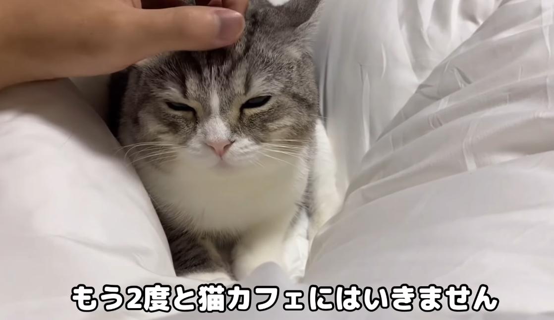 Видео с котом посмотрели более 600 миллионов раз