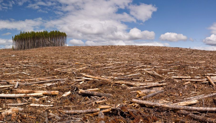 Вирубка лісів душить планету, попередив Гутерреш