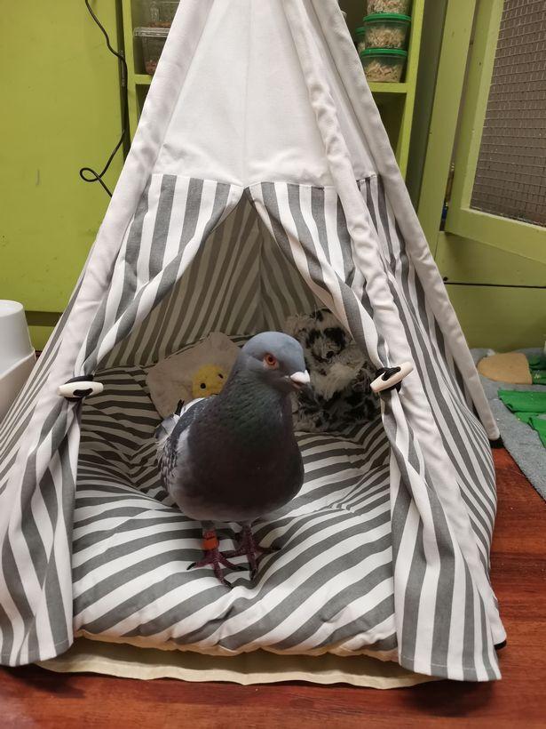 Спальное место для голубей