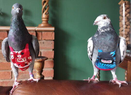 Спасенные голуби Мэгги