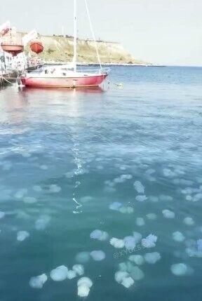 Медузы атаковали Черное море