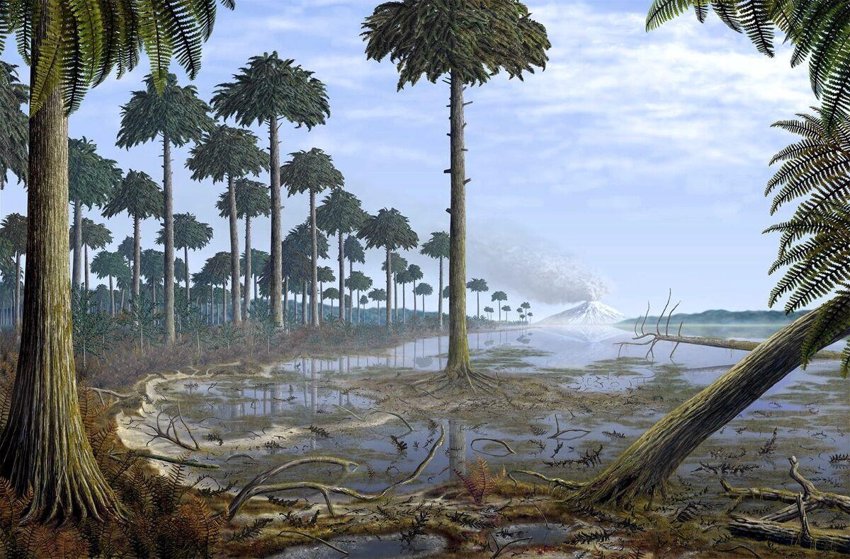 Одні з перших дерев у світі – археоптериси (Archaeopteris)