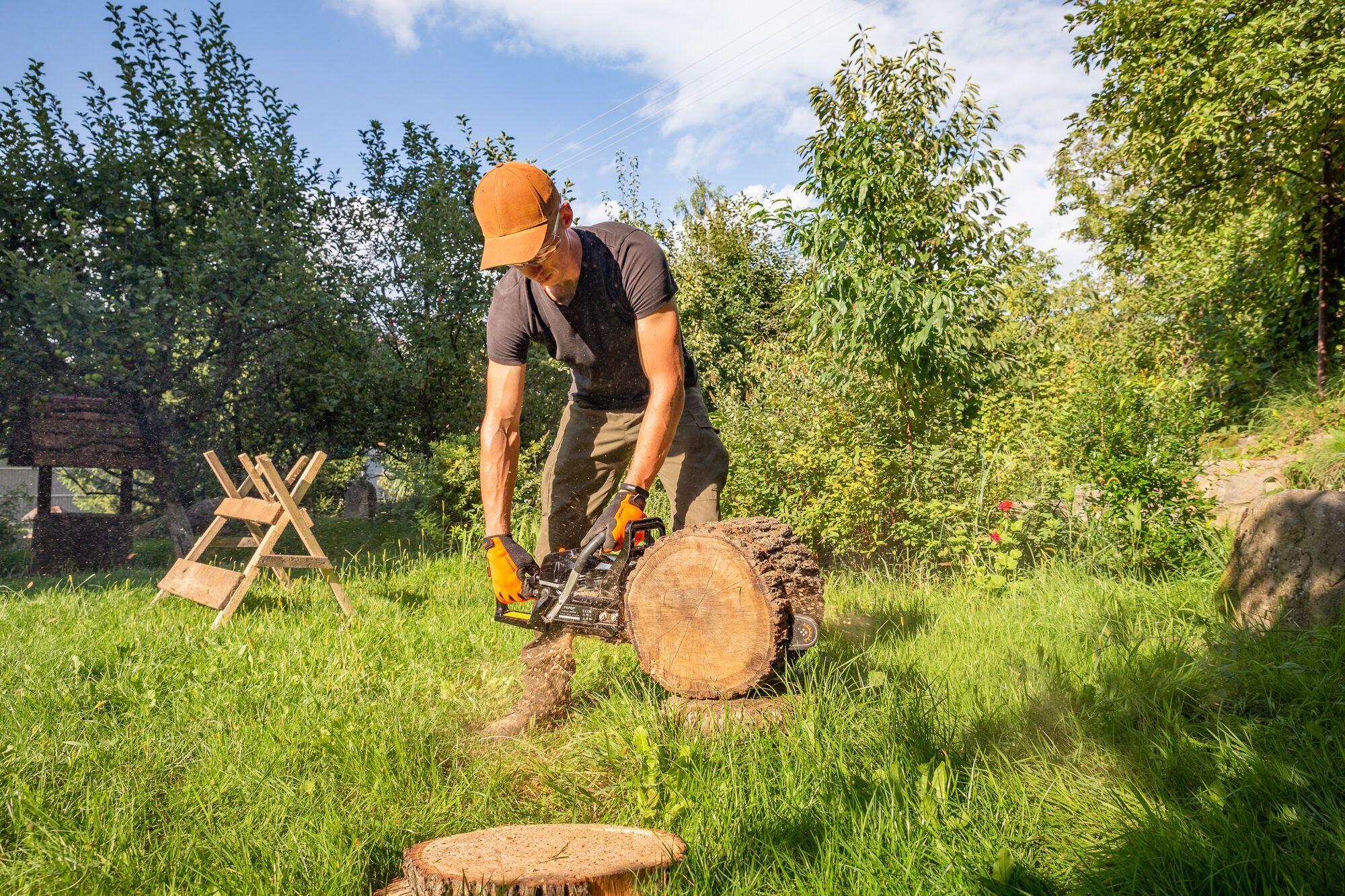Чем обрезать деревья осенью: тест-драйв бензопил от мастера