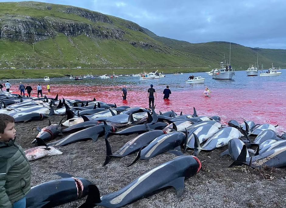 Вода в море покраснела от крови дельфинов