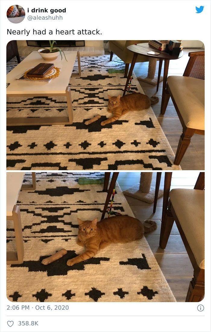 Кот играет с косточкой.