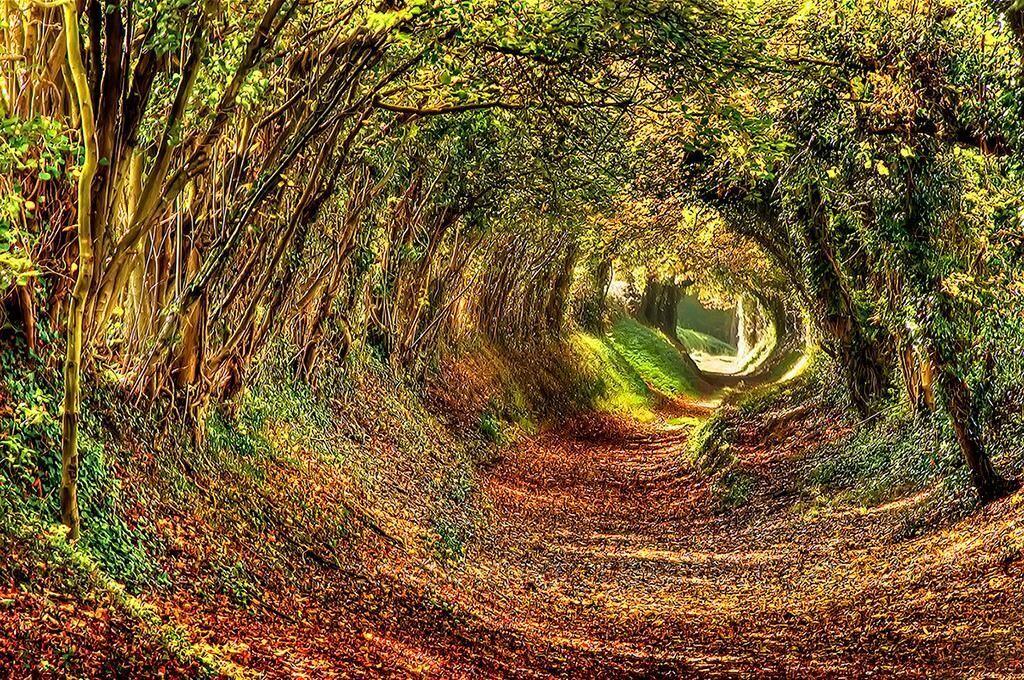 Эшдаун, лес на востоке Сассекса
