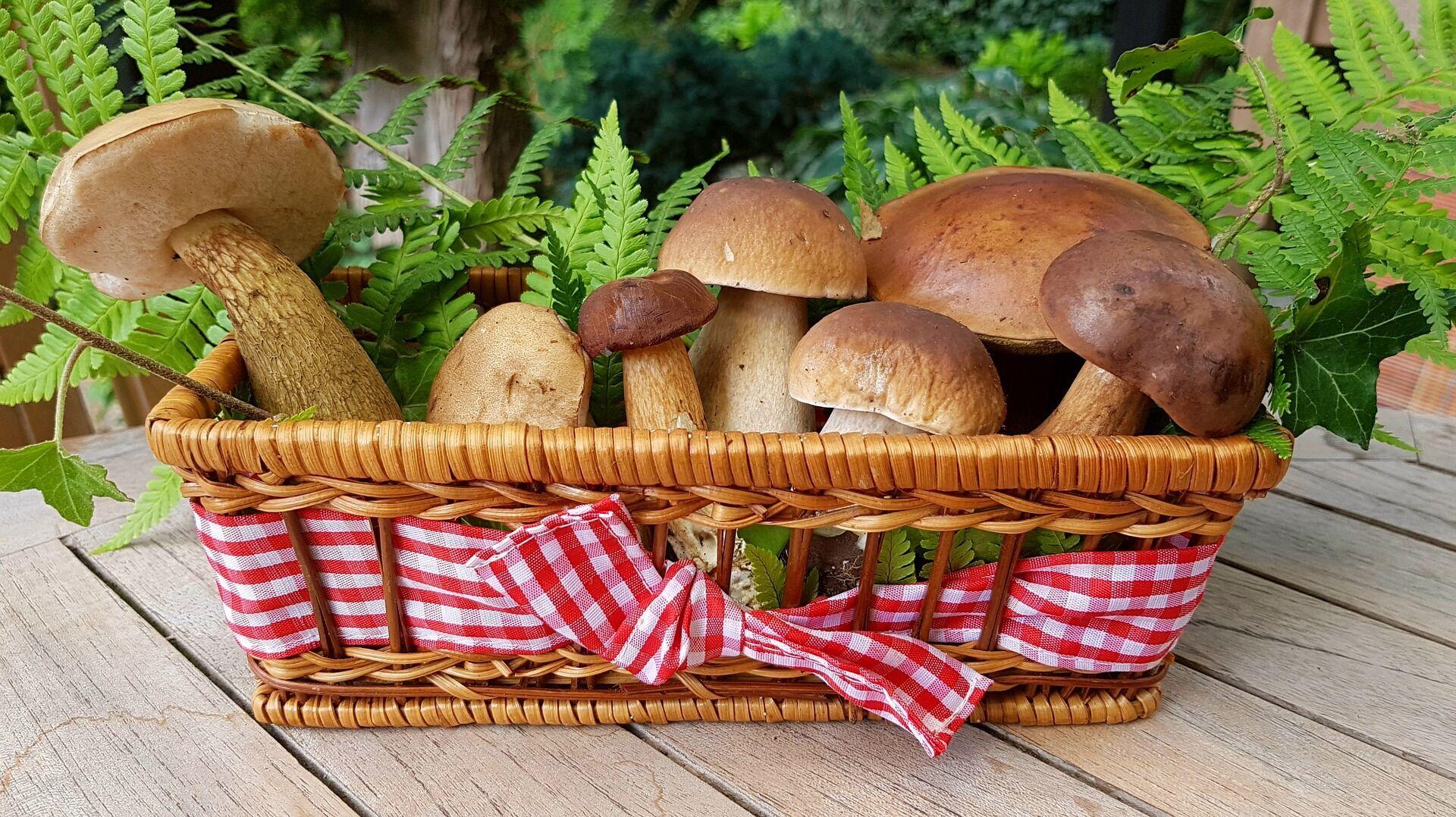 Лісні гриби