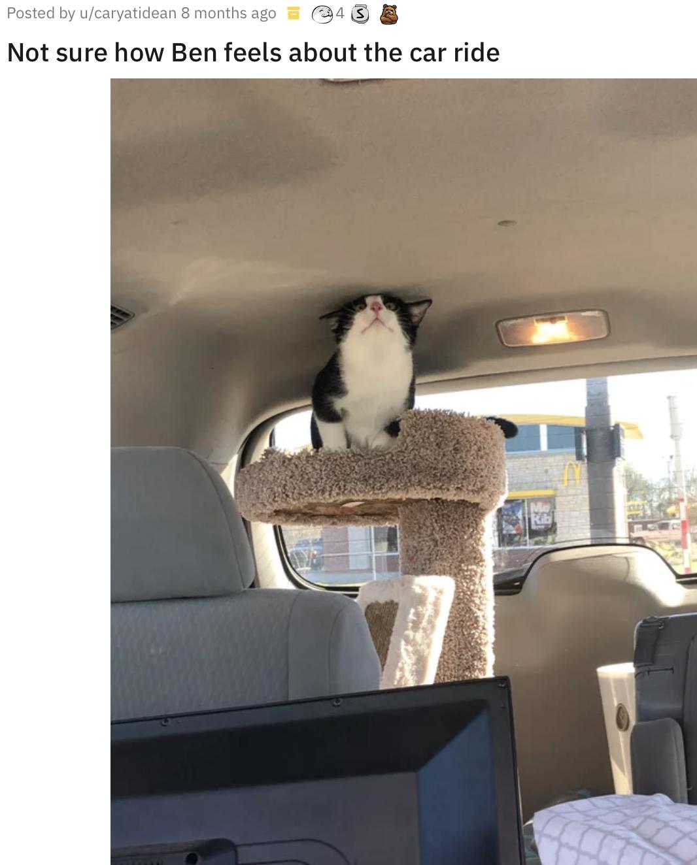 Кот занял почетное место.