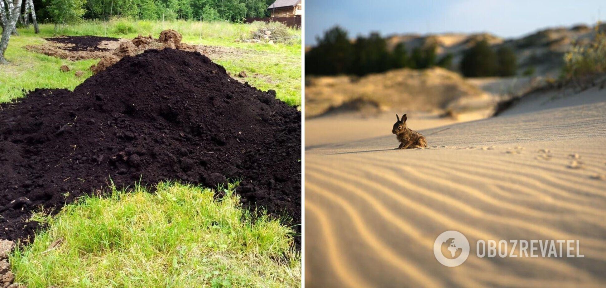 Место черноземов в степи могут занять пустыни.