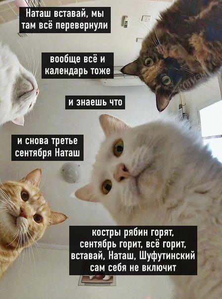 Мем про 3 сентября с котами и Наташей