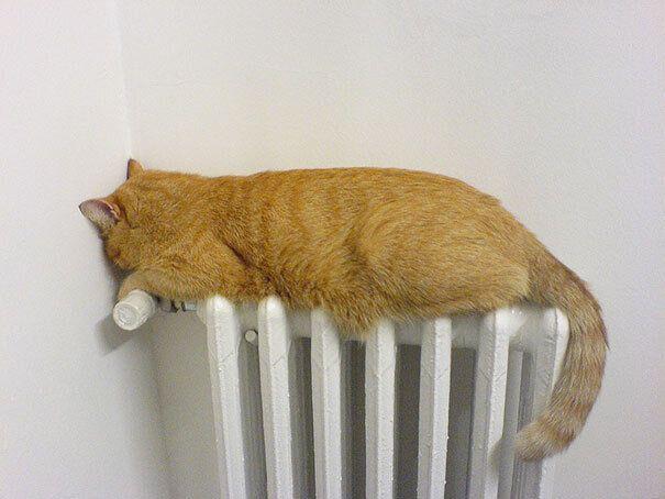 Кіт цілу зиму проводить на батареї