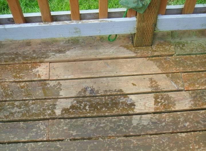 Пес лінувався піти з дощу