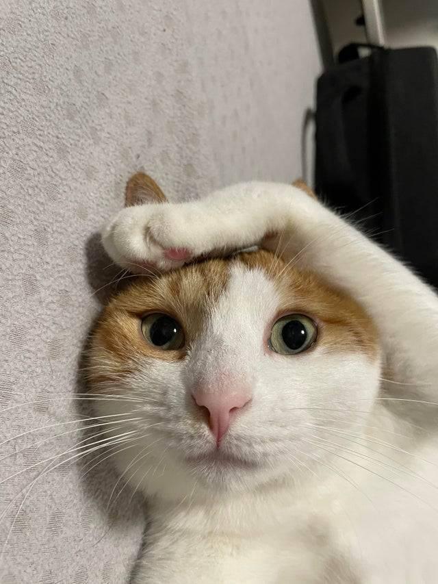 Кіт зацепився кігтиком