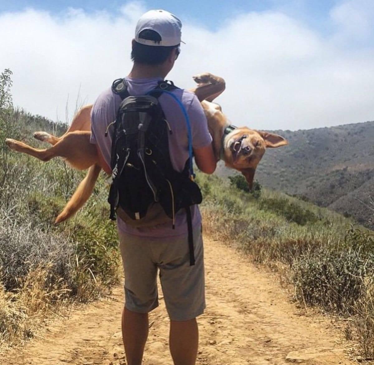 Пес радіє життю