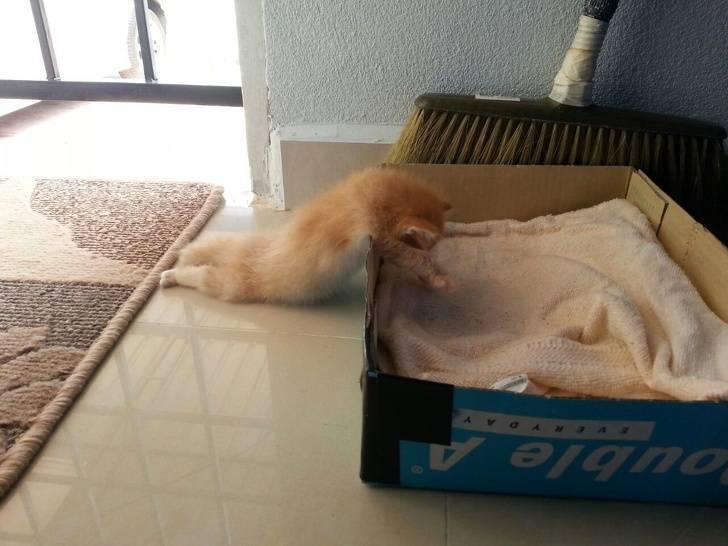 Кошеня не дійшло до спального місця