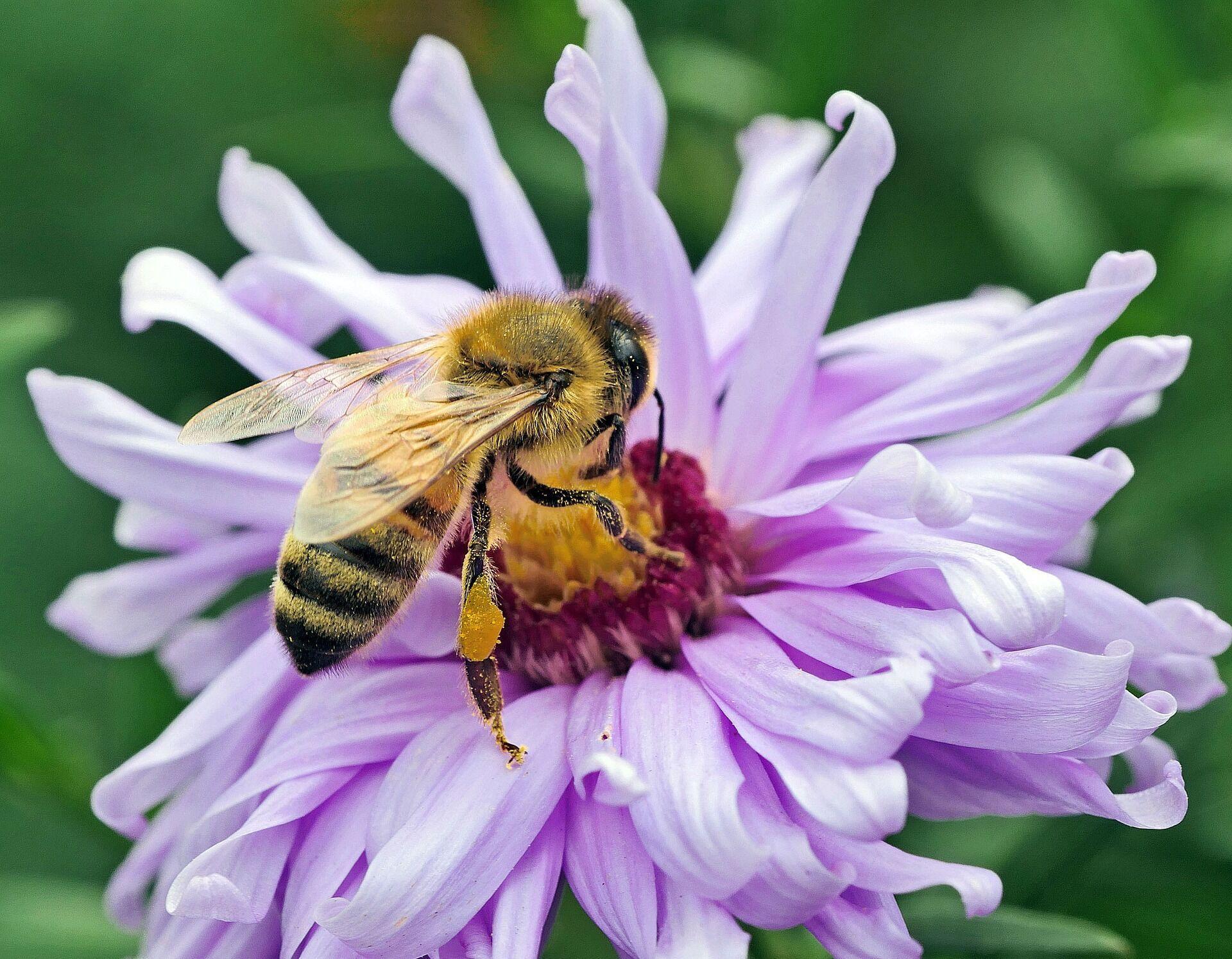 Пчелы летают на Федору – зима будет поздней