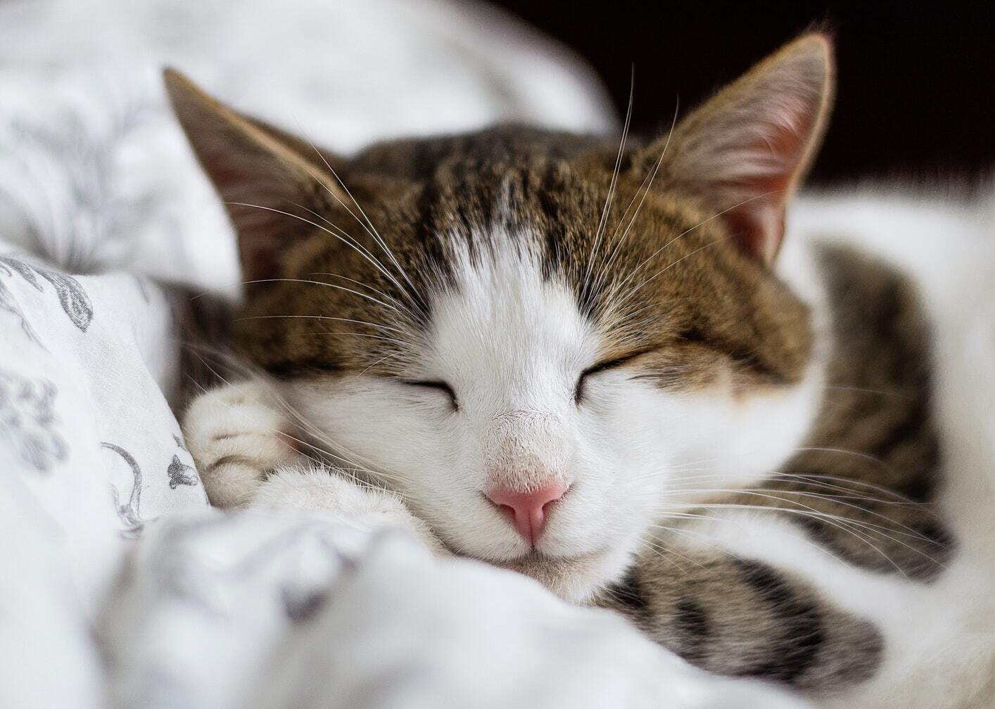 Засинайте у прохолодній кімнаті та повній темряві.