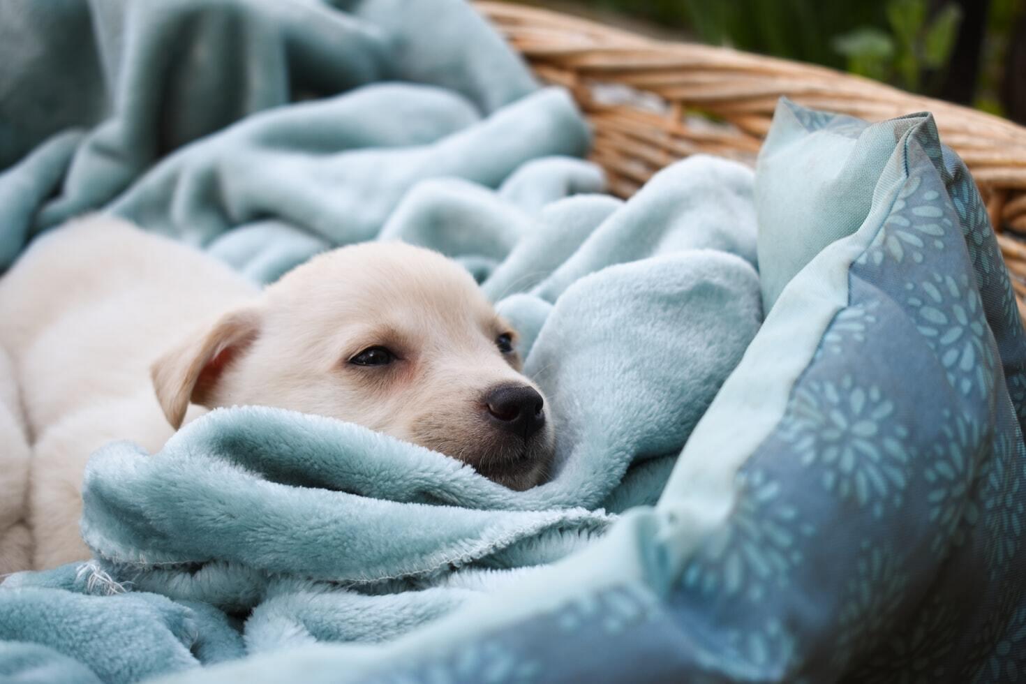 Комусь достатньо 4 годин сну, а хтось не висипається й за 12.