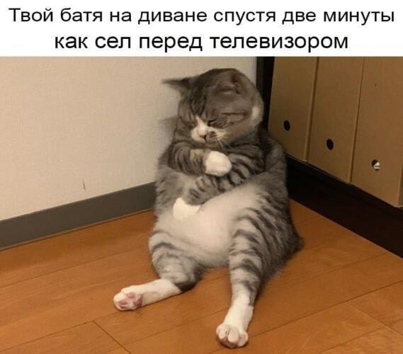 Втомлений кіт став мемом