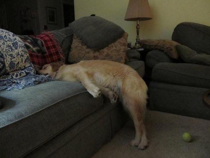 Песику заборонюють спати на дивані