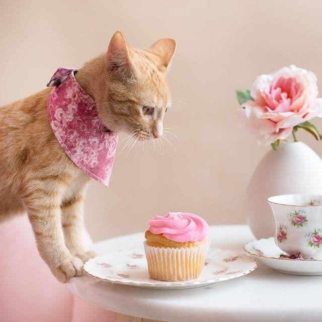 Кошка по кличке Хани