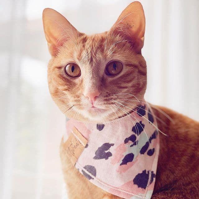 Звезда интернета кошка по кличке Хани